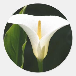 Calla Lily Classic Round Sticker