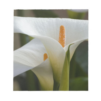 calla lily in the garden notepad