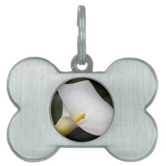 calla lily in the garden pet ID tag