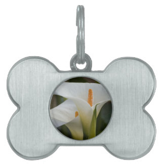 calla lily in the garden pet name tag