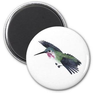 Calliope Hummingbird Magnets