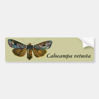 Calocampa vetusta bumper sticker