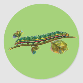 Calocampa vetusta caterpillar round sticker