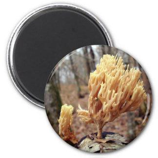 Calocera viscosa Mushroom Magnet