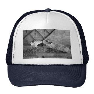 calves trucker hats
