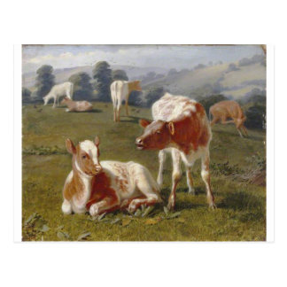 Calves in a Meadow by Briton Riviere Postcard