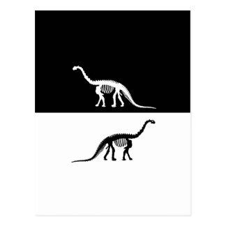 camarasaurus skeleton postcard