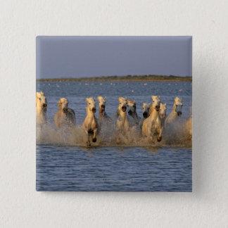 Camargue Horse (Equus caballus) 15 Cm Square Badge