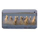 Camargue Horse (Equus caballus) Case-Mate iPod Touch Case