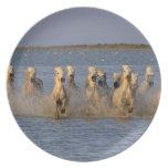 Camargue Horse (Equus caballus) Dinner Plates