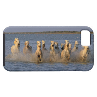 Camargue Horse (Equus caballus) iPhone 5 Covers