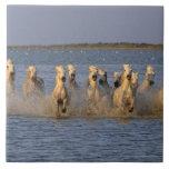 Camargue Horse (Equus caballus) Large Square Tile