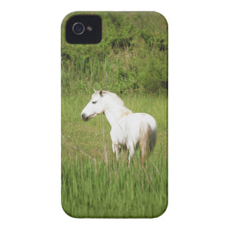 Camargue Horse in the Alpes Cote d Azur of the iPhone 4 Covers