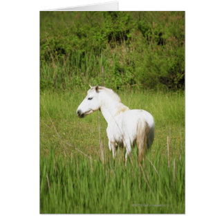 Camargue Horse in the Alpes Cote d'Azur of the Card