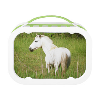 Camargue Horse in the Alpes Cote d'Azur of the Lunch Box