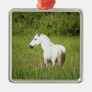 Camargue Horse in the Alpes Cote d'Azur of the Silver-Colored Square Decoration