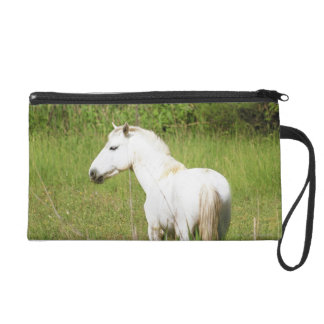 Camargue Horse in the Alpes Cote d'Azur of the Wristlet