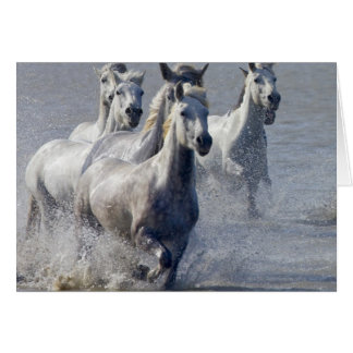 Camargue horses running on marshland to cross card