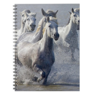 Camargue horses running on marshland to cross notebook