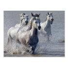 Camargue horses running on marshland to cross postcard