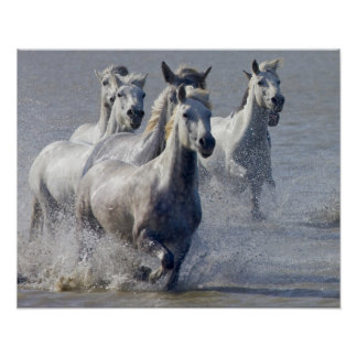 Camargue horses running on marshland to cross poster