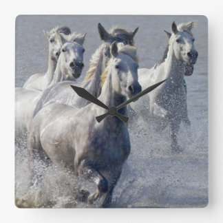Camargue horses running on marshland to cross wall clocks