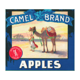 Camel Apple Label - Washington State Canvas Print