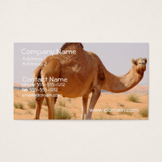 Camel Business Card