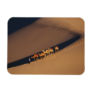 Camel caravan on the desert, Dunhuang, Gansu Magnet