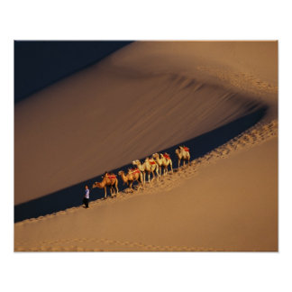 Camel caravan on the desert, Dunhuang, Gansu Poster