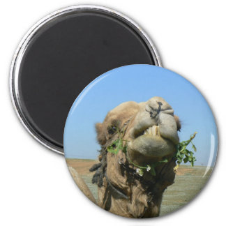 Camel chewing flowers magnet