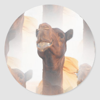 Camel Collage  Stickers