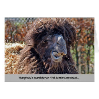Camel Dentist Card