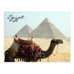 camel egypt pyramid