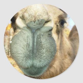 Camel Face Classic Round Sticker