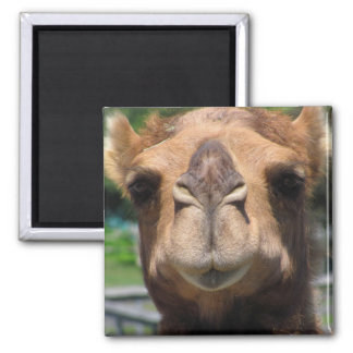 Camel Face Square Magnet