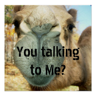 Camel Face, You talking to Me? Poster