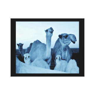 Camel Family Canvas Print