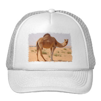 Camel for Arabs Baseball Hat