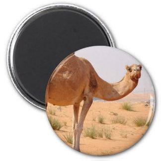 Camel for Arabs Magnet