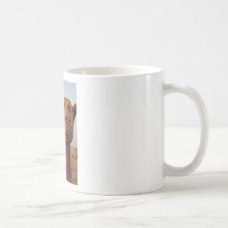 Camel in desert 2 basic white mug