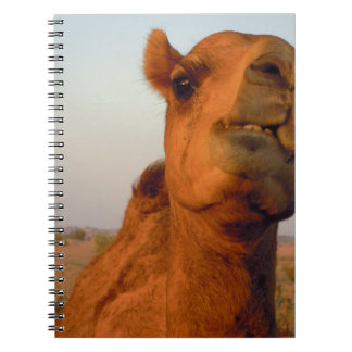 Camel in desert 2 notebook
