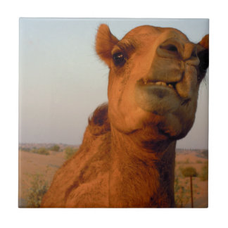 Camel in desert 2 small square tile