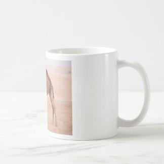 Camel in desert basic white mug