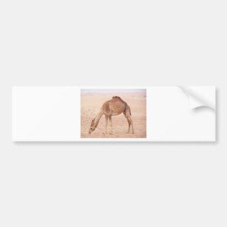 Camel in desert bumper sticker