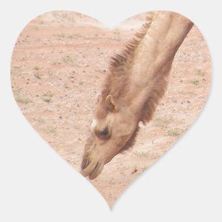 Camel in desert heart sticker