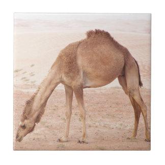 Camel in desert small square tile