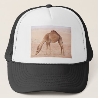 Camel in desert trucker hat