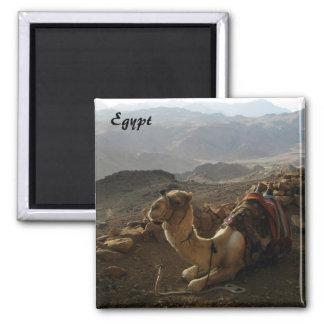 Camel in Egypt Magnet