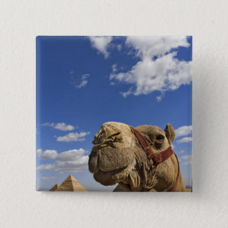 Camel in front of the pyramids of Giza, Egypt, 15 Cm Square Badge
